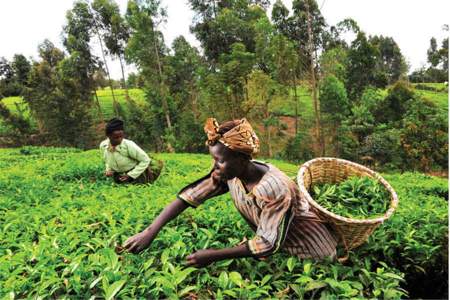 Unilever, transparenţă în lanţul de aprovizionare